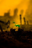 Young green plant in soil on background oil rocking machine.  Royalty Free Stock Image