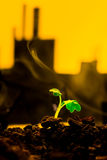 Young green plant in soil on background oil rocking machine.  Royalty Free Stock Photography