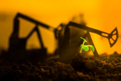 Young green plant in soil on background oil rocking machine Royalty Free Stock Photography