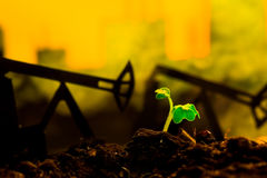 Young green plant in soil on background oil rocking machine.  royalty free stock photo
