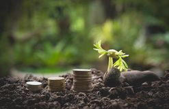 Young green plant with stack coin on ground for growing business financial stock images