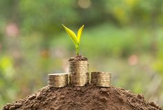 Young green plant with stack coin on ground for growing business stock photography