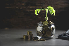 Young green plant with stack coin on ground for growing business royalty free stock image