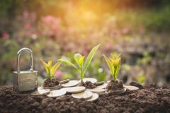 Young green plant with stack coin on ground for growing business stock photo