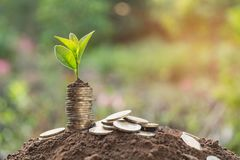 Young green plant with stack coin on ground for growing business stock image