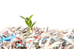 Young green plant in stack of scrap paper Royalty Free Stock Photo