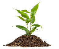 Young green plant on a white Stock Image