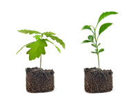 Young green plants Royalty Free Stock Photography