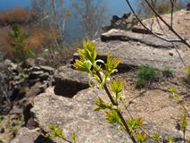 Young green on the rocks royalty free stock photography