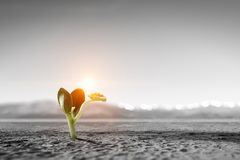 Birth of new life. Young green seedling growing in desert sand royalty free stock photography