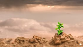 Birth of new life. Young green seedling growing in desert sand royalty free stock images
