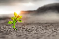 Birth of new life. Young green seedling growing in desert sand stock photos