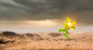 Birth of new life. Young green seedling growing in desert sand stock photography