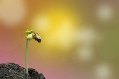 Young green seedling of plant germinate Royalty Free Stock Image