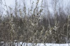 Young green shrub in the winter forest without leaves in the spring. All frozen in the woods Royalty Free Stock Photography