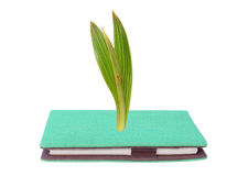 Young green small plant growing from green book. Isolated Stock Photos