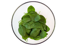 Young  green spinach in a transparent   plate, top view, isolate Royalty Free Stock Image