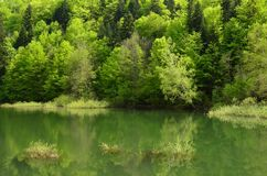 Young, green spring forest on the lake shore royalty free stock photography