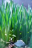 Young green of spring grass Stock Image