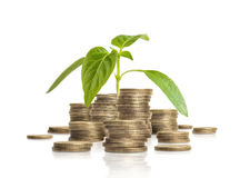 Young green sprout growing from pile of coins. Business and success concept Stock Photo