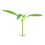 Young green sprout Stock Photography