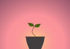 Young green sprout in the pot against the background of the sunrise Stock Image