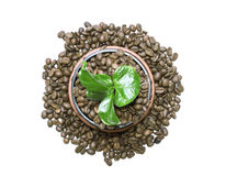 Young green sprout of a tree growing out of the coffee beans Stock Photo