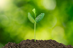 Young green sprout with water drop growing out from soil isolated on blurred green bokeh background Stock Photo