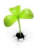 Young green three leaf sprout Royalty Free Stock Images