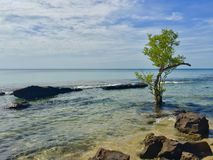 Young green tree on the sea. Surrounded by rocks and stones, clear water. Ocean view, blue cloudy sky. Seascape, leisure time royalty free stock image
