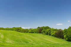 Young green wheat field. Young green wheat hill field on a background of the blue sky, line of trees Stock Images