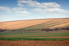 Young green wheat field landscape Royalty Free Stock Images