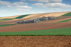 Young green wheat and plowed fields and orchard Stock Image