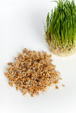 Young green wheat sprouts in a glass container  on a whi Stock Photos