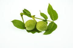 Young green wolnut isolated on a white background. Useful fruit of pure Ukrainian gardens royalty free stock image