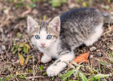 Young grey kitty cat looking surprised and scared in the bushes stock photo