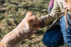 Young gril playing with her dog outside on a field. Dog is very happy. Friendship between human and dog Stock Image