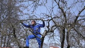 Young grower man pruning branches with shears high on tree on blue sky. Young grower man pruning fruit tree branches with shears high on tree on blue sky stock footage