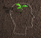 Young growth of idea inside of human head on soil concept Stock Photos