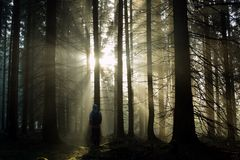 Young guy with a backpack standing in a forest in the mist at sunrise Royalty Free Stock Photography