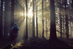 Young guy with a backpack standing in a forest in the mist at sunrise Royalty Free Stock Image