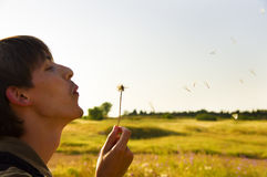 The young guy blows on a dandelion Stock Photography