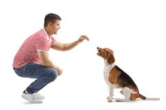 Young guy giving a biscuit to a beagle dog. Isolated on white background stock photo