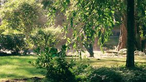Mowing behind the tree. Young guy mowing lawn in the sun behind a weeping cherry tree stock footage