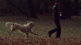 Young guy playing with the dog. In the park stock footage