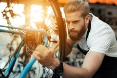 A young guy repairs a bicycle. Royalty Free Stock Images
