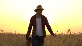 Young guy walks the golden wheat field in the rays of the sunset and plays the guitar stock footage