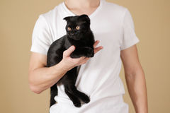 Young guy in a white shirt holding a black Scottish fold cat on. An isolated background Stock Images