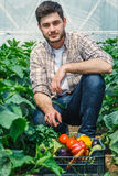 Young guy working in a greenhouse. Young handsome photogenic guy is sitting between rows of plants while working in a greenhouse Royalty Free Stock Images