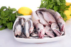 Young hake. Some fresh young hakes and anchovys in a white dish ready for cook stock photo